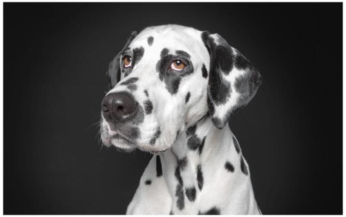 Dog04
