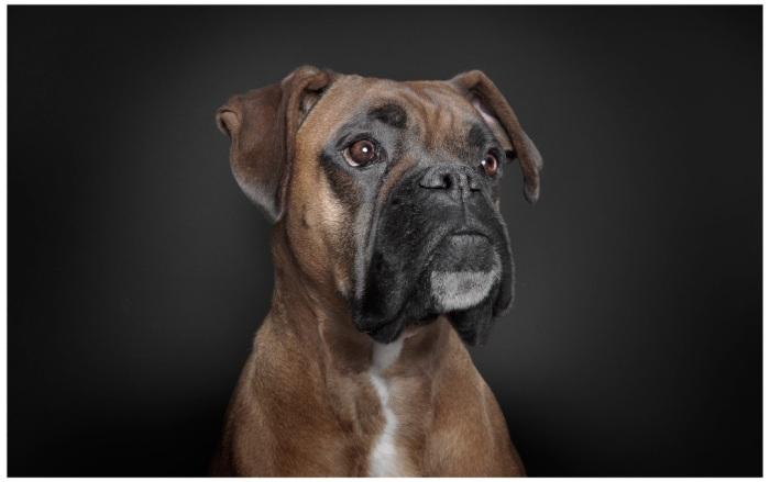 Dog05