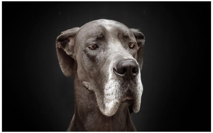 Dog07