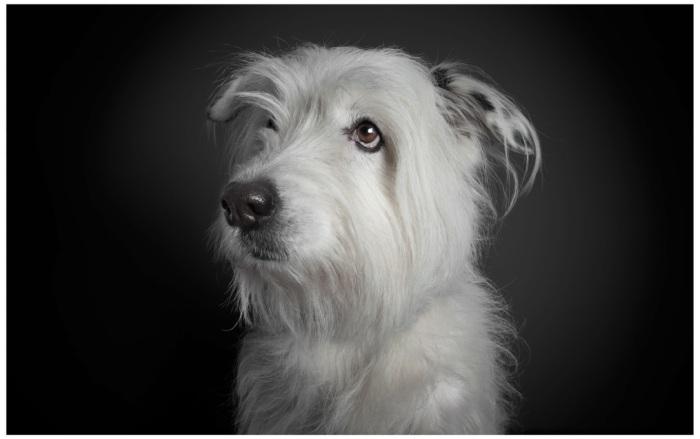 Dog09