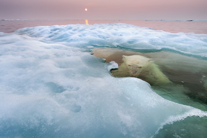 The water bear. Paul Souders, USA.