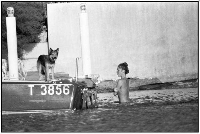 Brigitte Bardot DOG
